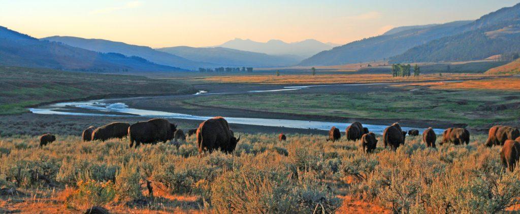 bizony w Yellowstone
