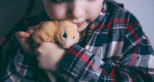dziewczynka trzymająca w dłoniach chomika