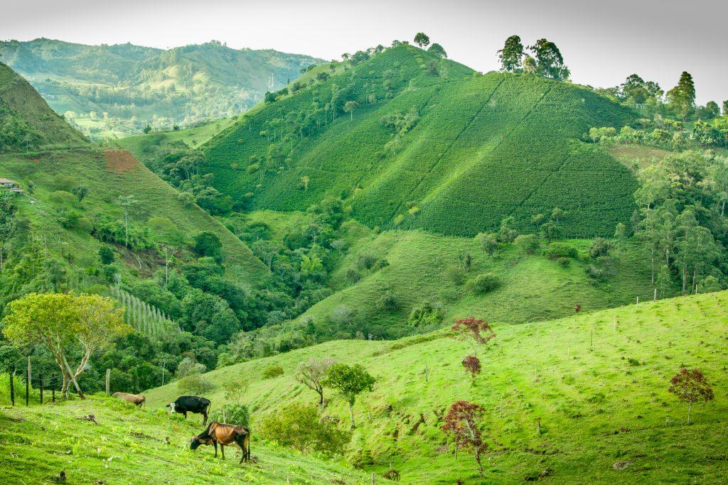 Jerico - plantacja kawy w Kolumbii