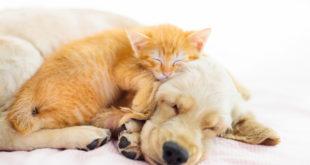 rudy kociak śpiący na biszkoptowym szczeniaku
