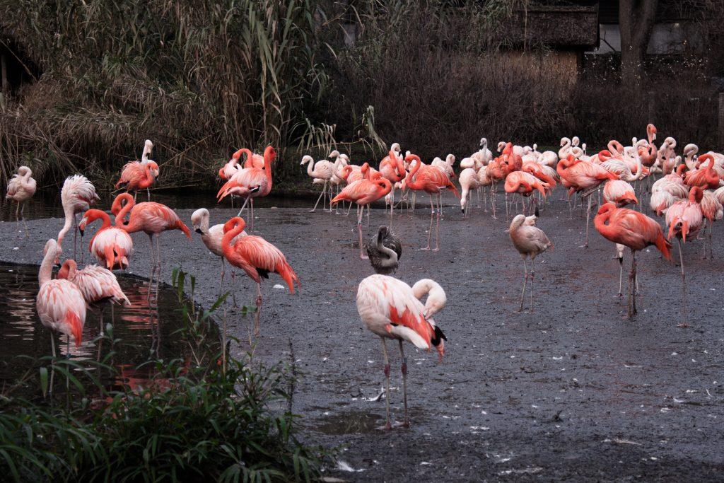 praga ogród zoologiczny