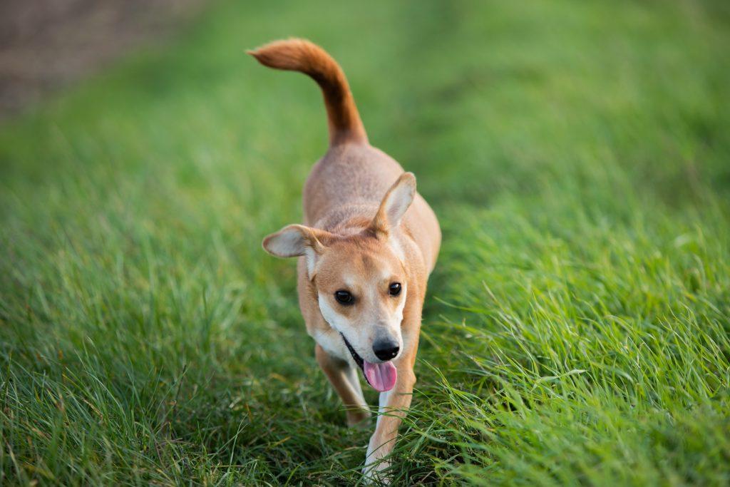 Radosny pies na zielonej łące