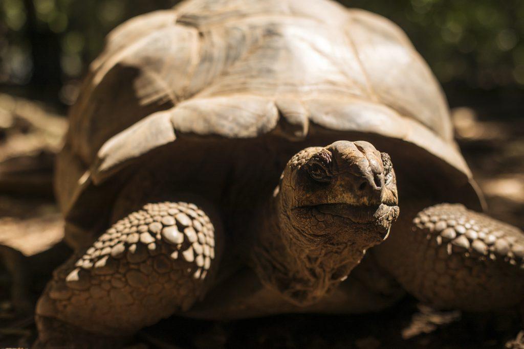 Zanzibar sanktuarium żółwi olbrzymich,
