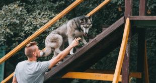 zoopsycholog z psem