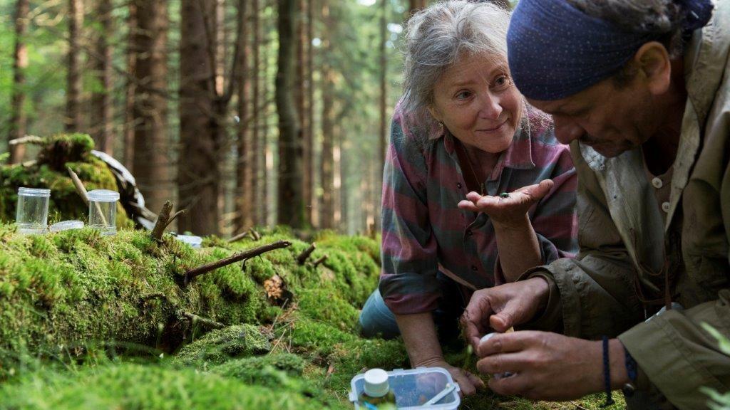 Przyroda w filmie Pokot