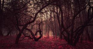 tajemniczy las z filmu grozy