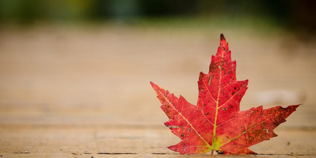 Kanada liść klonu