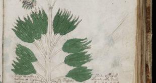 manuskrypt wojnicza sekcja zielarska