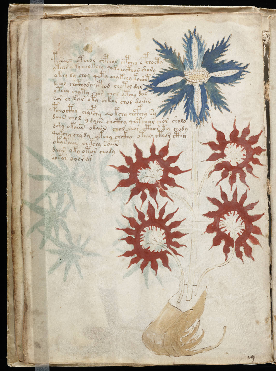 manuskrypt wojnicza