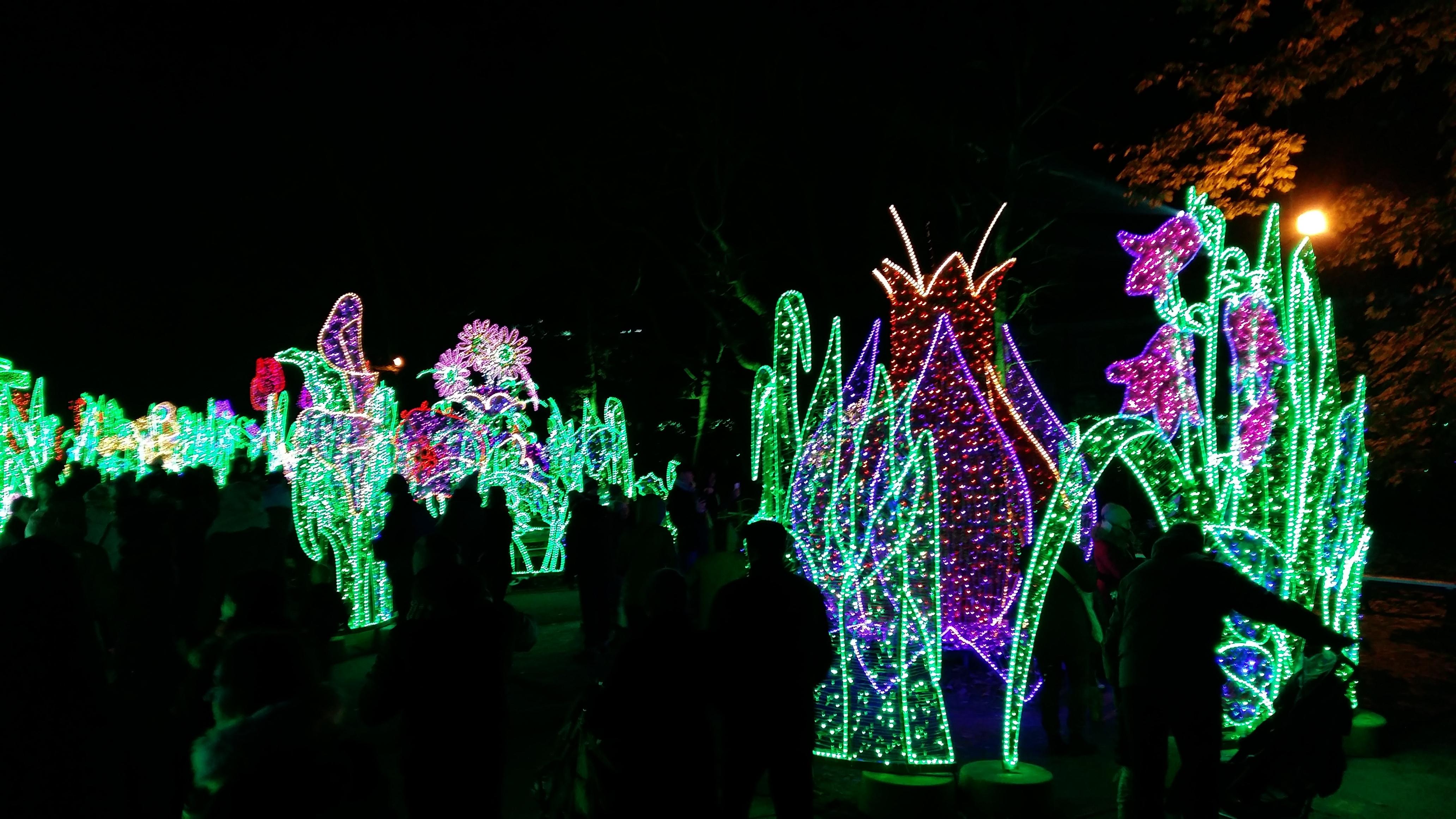 Królewski Ogród światła Dla Małych I Dużych Kreatywnapl