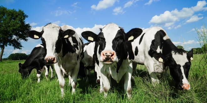 Ministerstwo proponuje nowe rozwiązania dla rolników