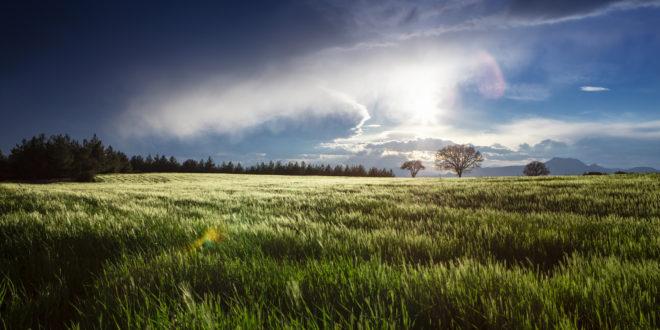 zjawiska pogodowe rolnictwo