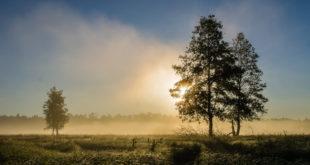 Białowieża - leśna polana