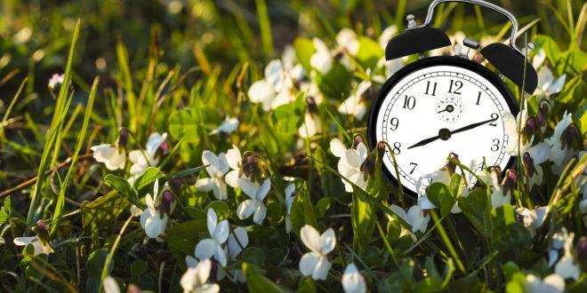 zegarek w trawie