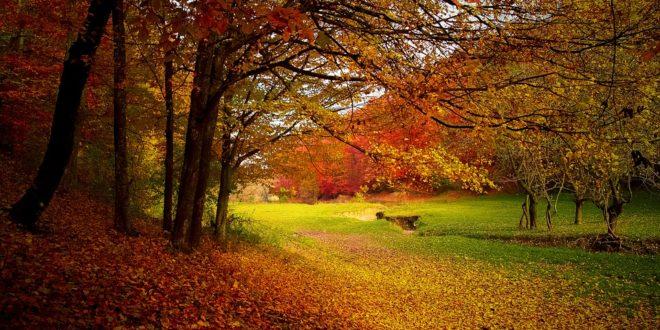 Jesień - pejzaż