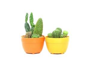 Kaktus | fot.: Fotolia
