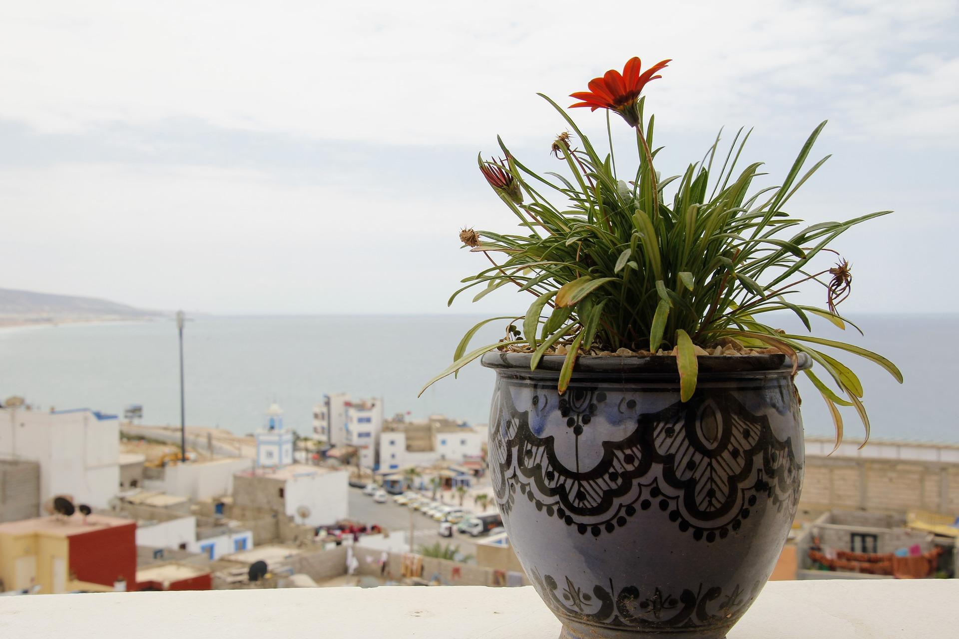 Kwiaty Doniczkowe Kwitnace I Zielone Ktore Warto Miec W Swoim Domu Kreatywna Pl