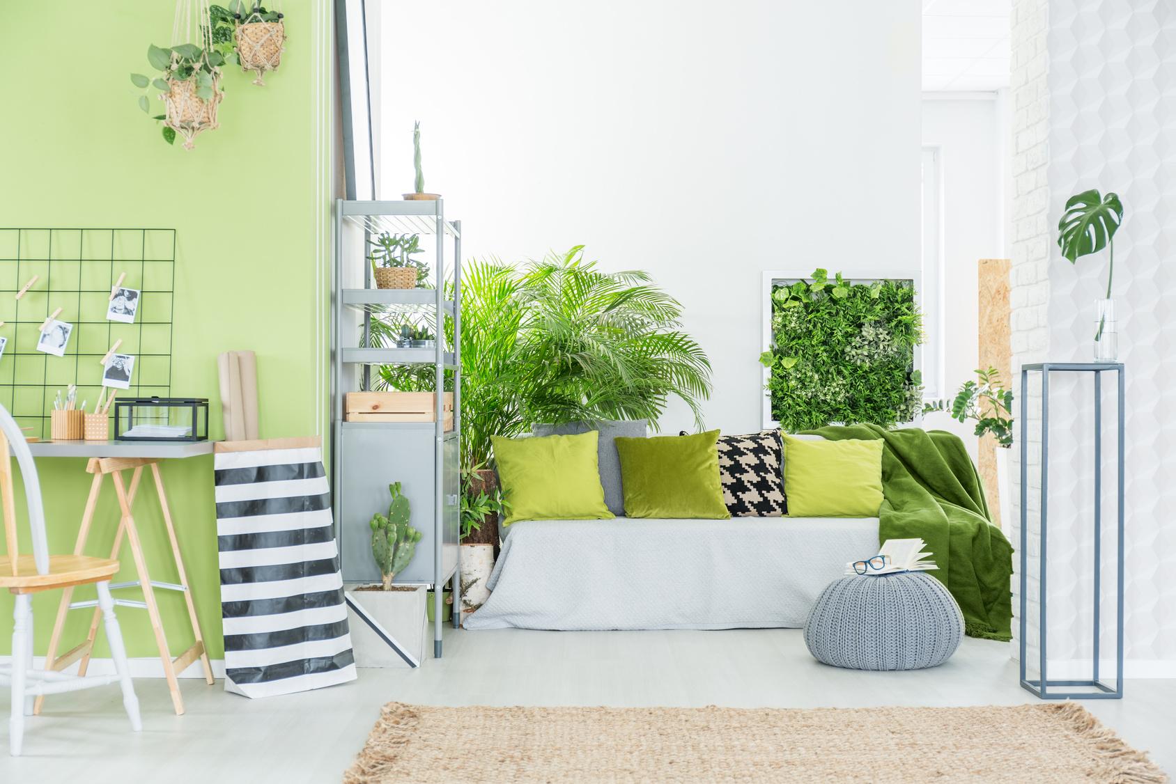 rośliny zielone we wnętrzu