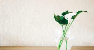 zielone rośliny w wazonie na tle jasnej tapety