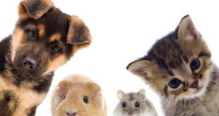 Zakup zwierzęcia dla dziecka