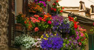 romantyczny balkon surfinie