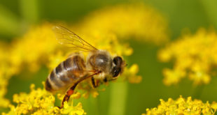 Po co nam pszczoły