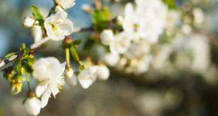 Od czego zacząć sezon ogrodniczy?