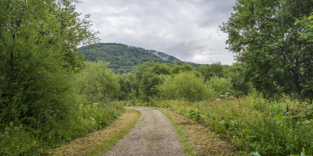 Bieszczady, leśna droga, Wołosate