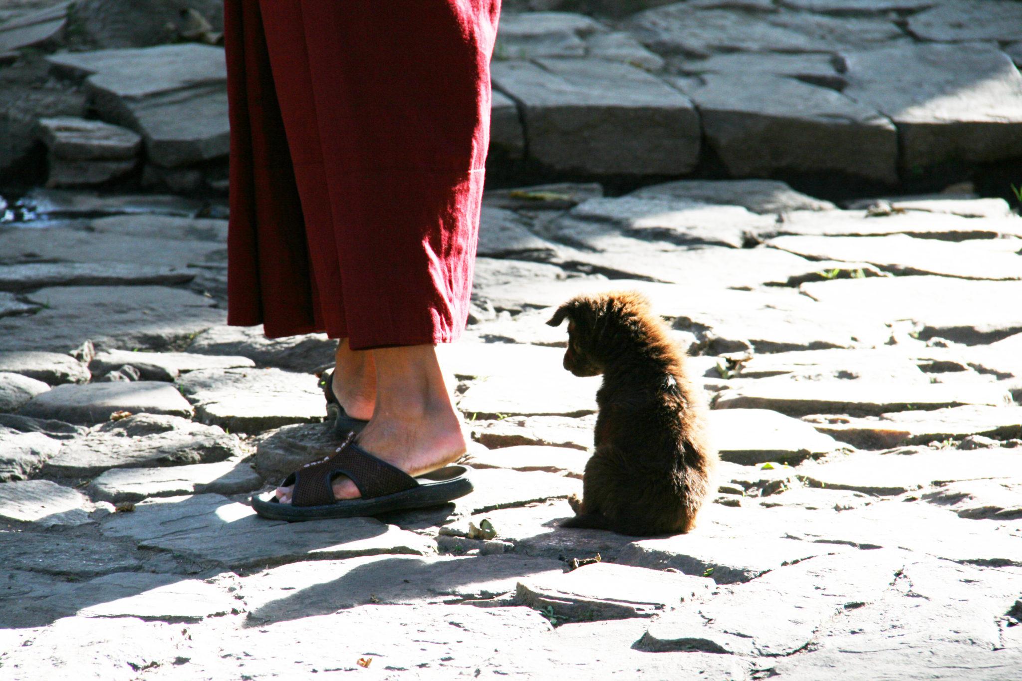 szczeniak siedzący przy nogach mnicha Buthan