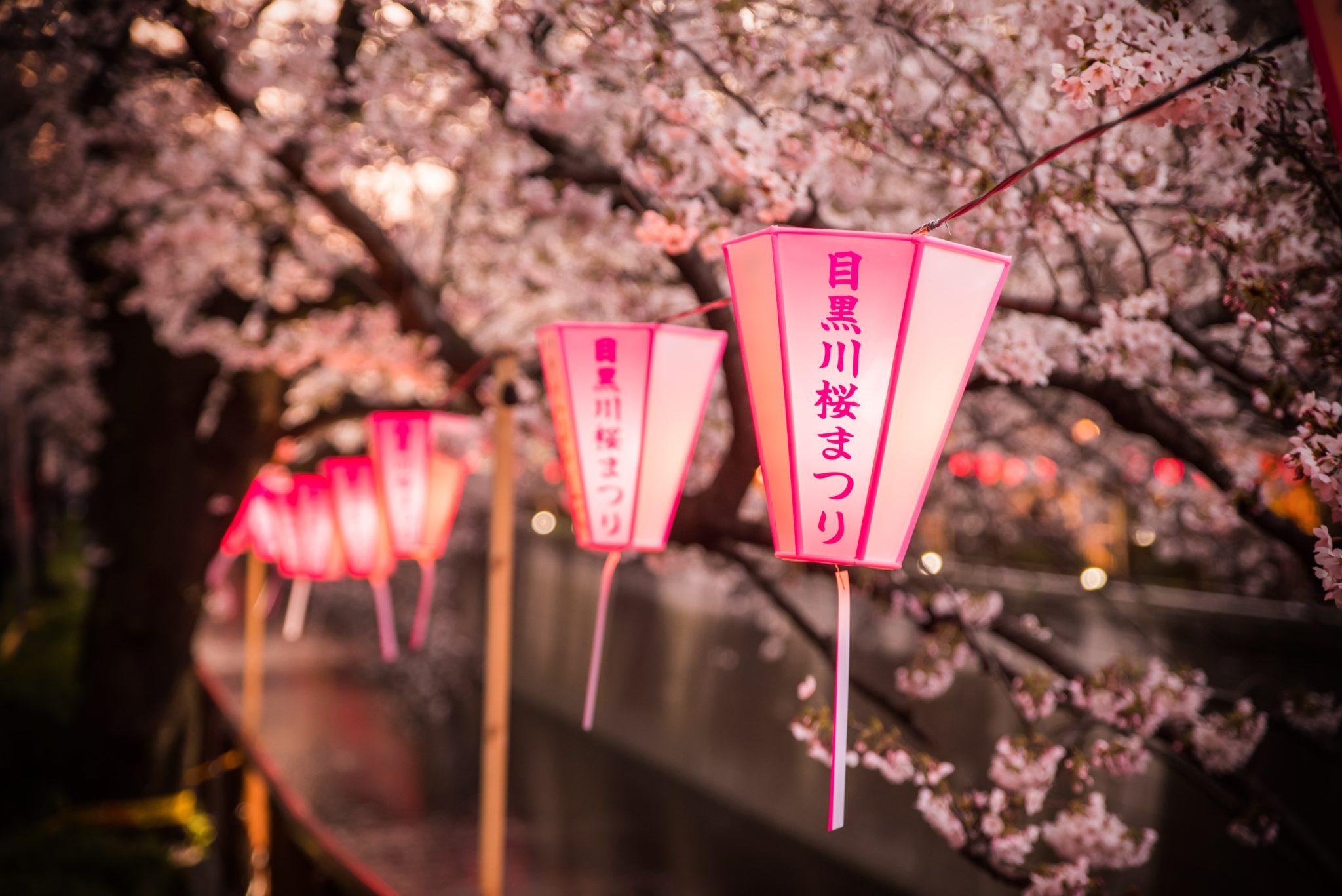 Japonia, kwitnące wiśnie i lampiony