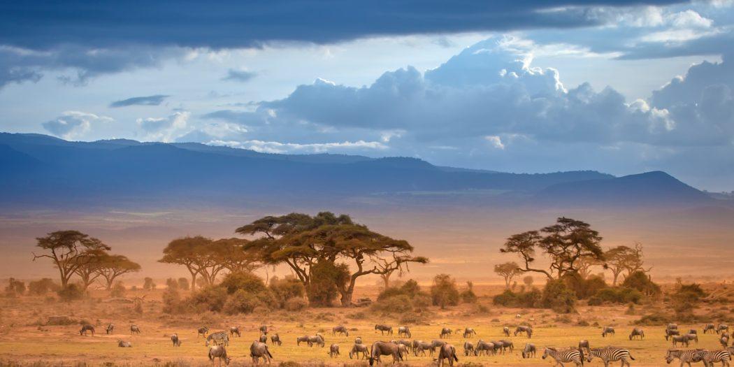 afrykańska sawanna Kenia