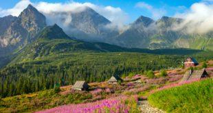 widok na Tatry