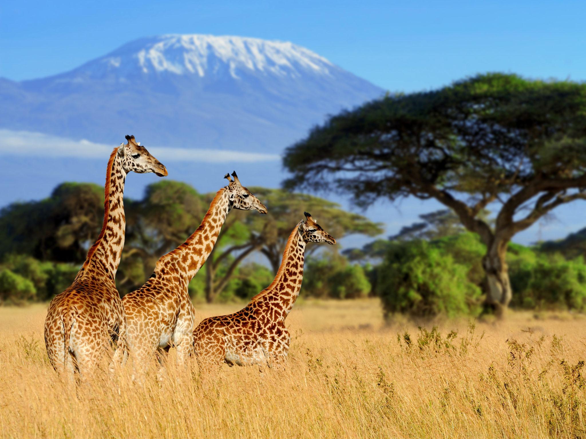 Kilimandżaro (5895 m n.p.m)