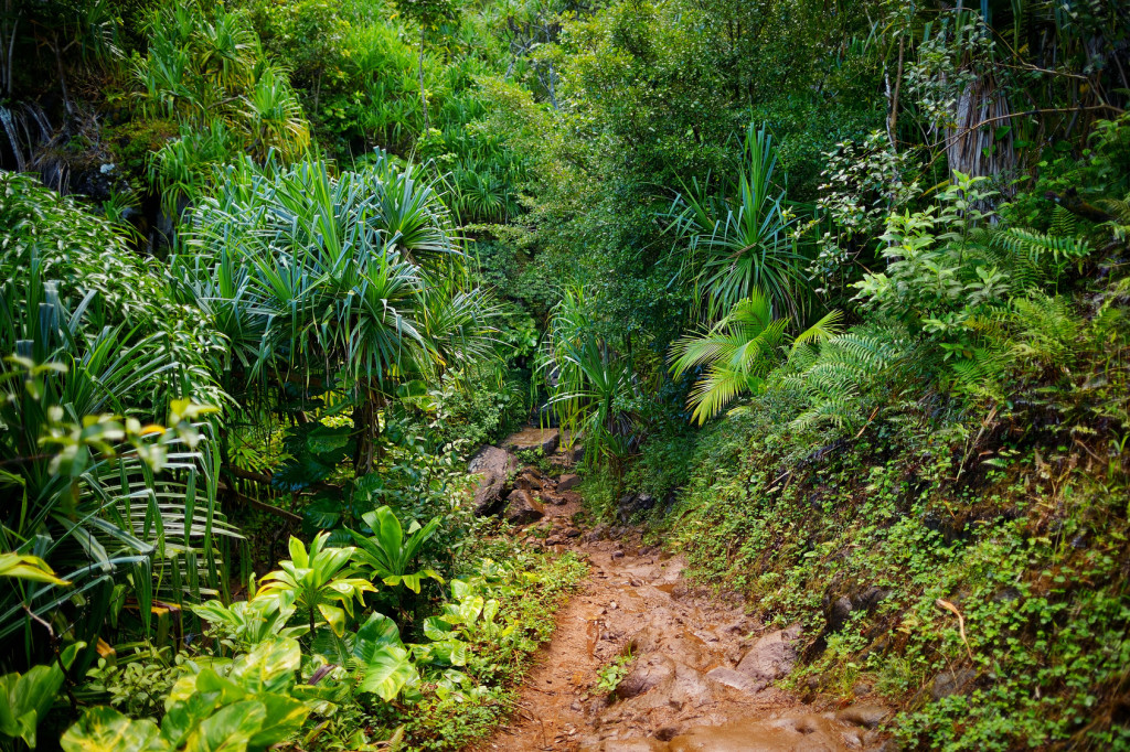 Kalalau trail trekking