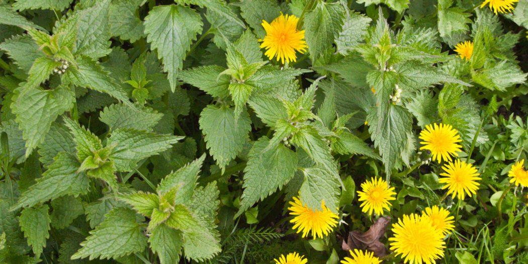 wiosenne zioła