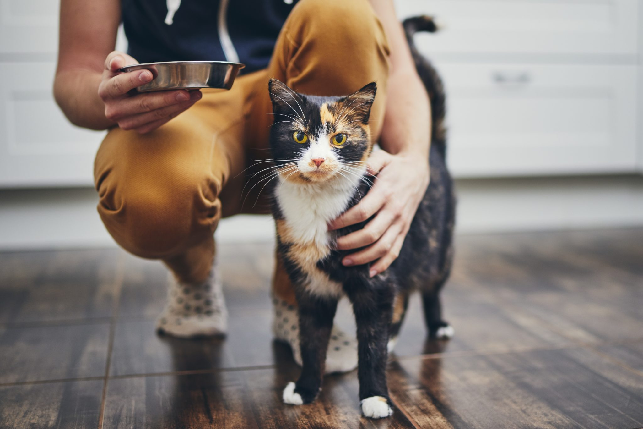 człowiek w domu z szylkretowym kotem