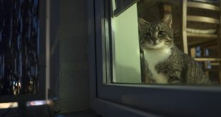Kot w mieście