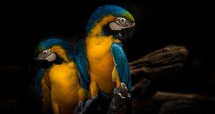 papugi w domach
