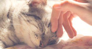 Zasady pielęgnacji kotów