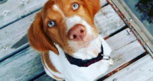 Charakter psa ze schroniska