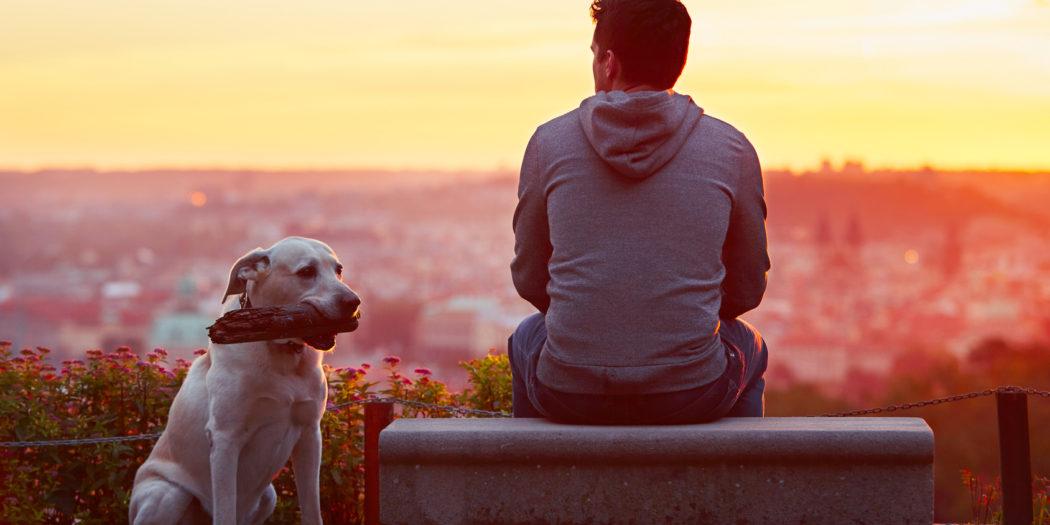 Jak spacerować z psem