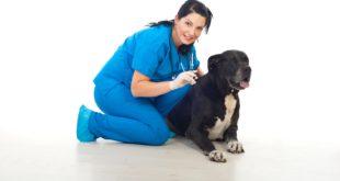 psie szczepienia