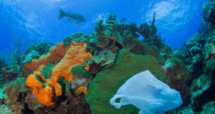 zanieczyszczenie oceanu plastikiem