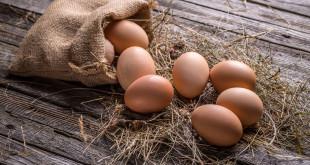 Jajka fakty i mity