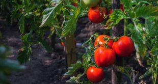 żywność ekologiczna w profilaktyce raka